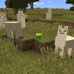 how to control a llama in minecraft